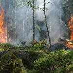 How to Control Australian and Amazon Forest Fire-Like Events in the Future?