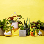 Quick Guide for Decorating Home with Plants