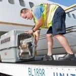 How to ship your pet via airline
