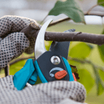 Importance Of Tree Trimming And Why It Should Only Be Performed By The Professionals?