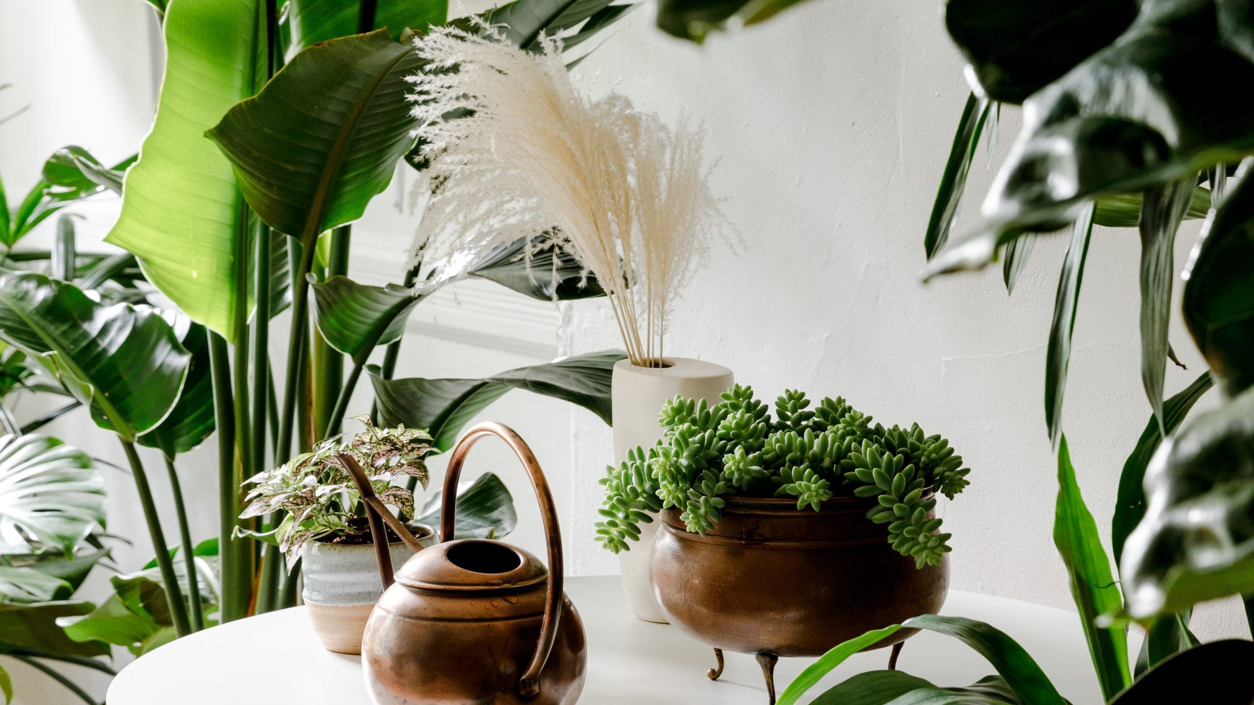 What do large-leaved plants do for feng shui