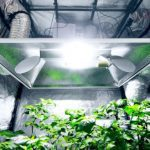 Reasons Why Use a Grow Tent the Benefits