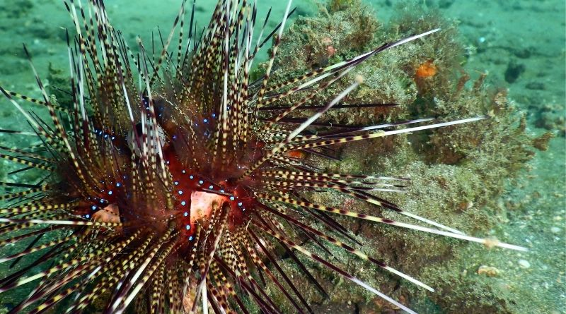Interesting Facts About the Creature and Size of a Sea Urchin