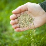 Grass Seed for Northern Virginia