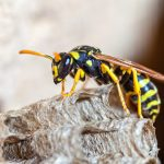 Debunking the Most Common Myths That Exist About Wasps