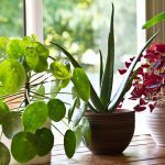 How to Buy the Right Plants for Your House