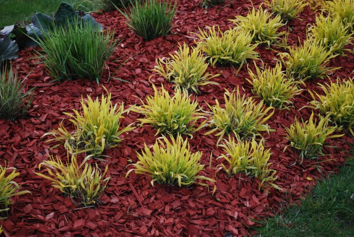 What Are the Different Kinds of Landscaping Bark?